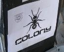 colonythumb.jpg